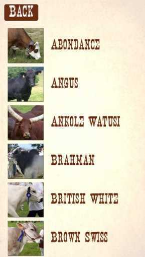 Cattle_Breeds:_Various_Types_of_Cattle